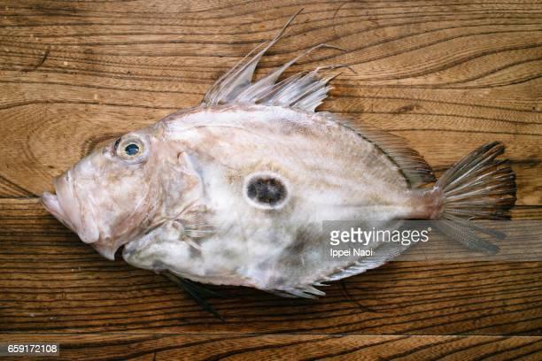 John Dory fish on wooden table, Japan