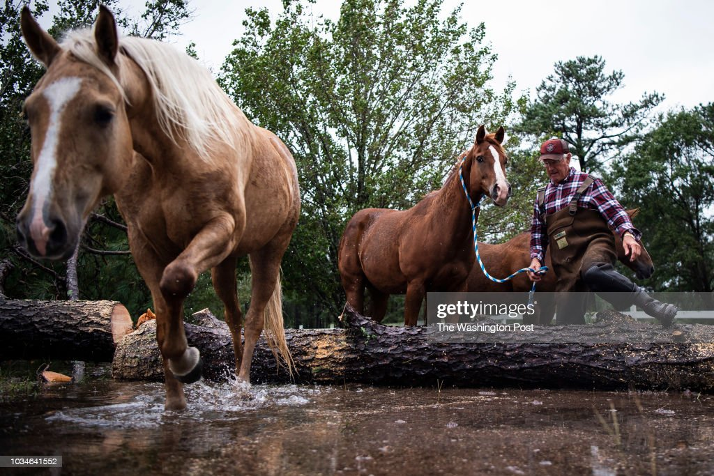 John Hendren, 73, leads his horses to safety after members of the United States Coast Guard helped cut down a fallen tree trapping the horses in a flooded field on Sunday, Sept 16, 2018 in Lumberton, NC.