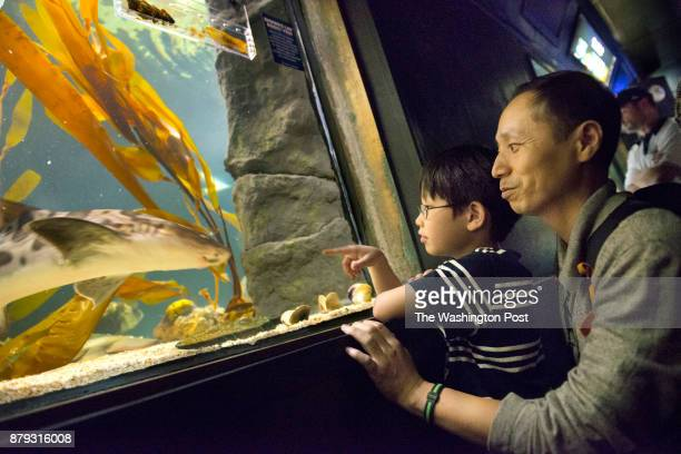 John Kim 7 and his father James Kim watch sharks being fed on the last day of the National Aquarium's DC branch in Washington DC on September 30 2013...