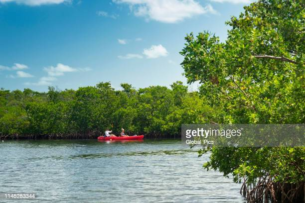 john pennekamp coral reef state park, florida keys - usa - state park stock pictures, royalty-free photos & images
