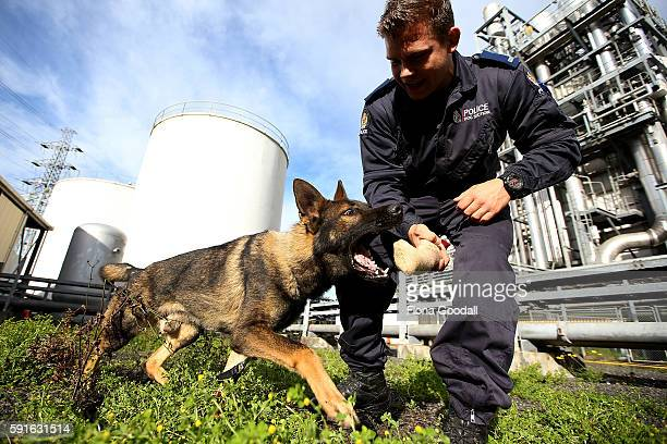 John rewards his trainee patrol dog Brew with a game after a succesful track on August 12 2016 in Auckland New Zealand The Auckland Police Dog Unit...