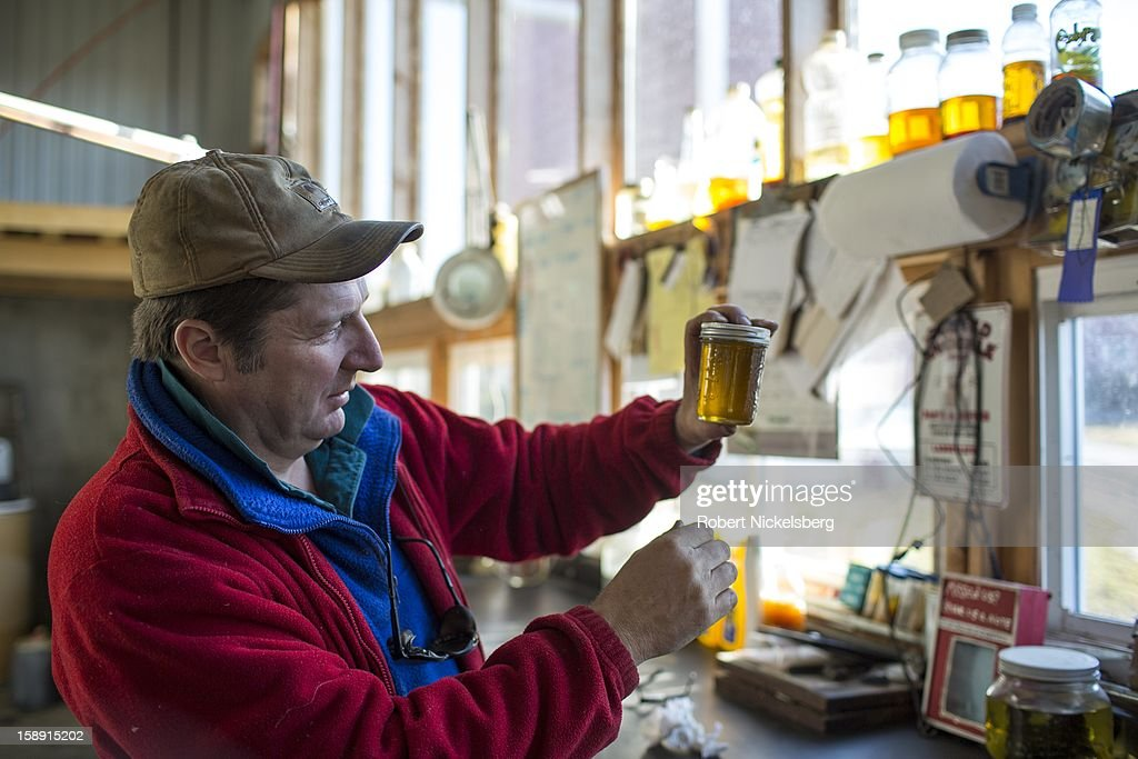 John Williamson inspects a container of freshly crushed flaxseed oil December 14, 2012 on his 200-acre organic farm in North Bennington, Vermont. Williamson's third-generation family farm sold off their dairy cattle and now run the farm as a pilot project for oil seeds to produce biodiesel and seed oils in a sustainable manner. Williamson had over 40-acres of his fields planted with sunflowers to crush for sunflower oil. He also experiments with sorghum, canola, mustard and saffron. Williamson's project has received grants from the University of Vermont for machinery for distilling biodiesel that he offers to farmers that have contributed seeds to his oil seed crusher and distillery. The by-product of the oil seed process also has value as animal feed stock. Williamson's farm is prioritizing not only total yield of the oil seed crops but the inputs necessary to grow, harvest and process the crops in a sustainable way.