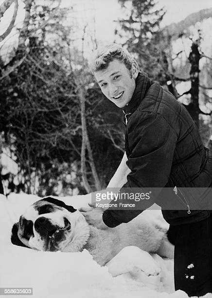 Johnny Hallyday playing with a Saint Bernard dog in Gstaad Switzerland on January 7 1962