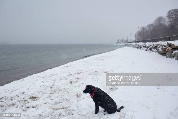 JoJo sits on East End beach in snow on Tuesday January 8 2019 JoJo and her owner Steve Kudlach come to the beach from their home in Windham multiple...