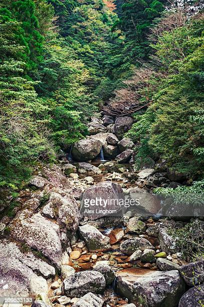 Jomon Sugi Trail, Yakushima, Japan