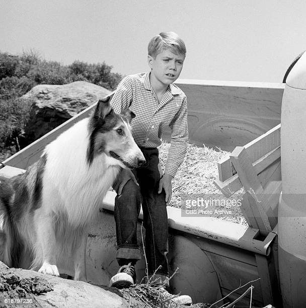 Jon Provost with Lassie in the CBS television show Lassie episode Lassie to the Rescue Image dated June 25 1963 Burbank CA