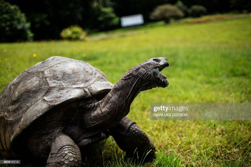 DOUNIAMAG-SAINTHELENA-CONSERVATION-ANIMAL : News Photo