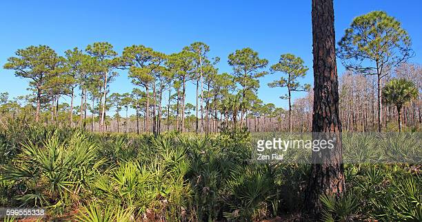 jonathan dickinson state park in martin county, florida - palmetto florida stock pictures, royalty-free photos & images