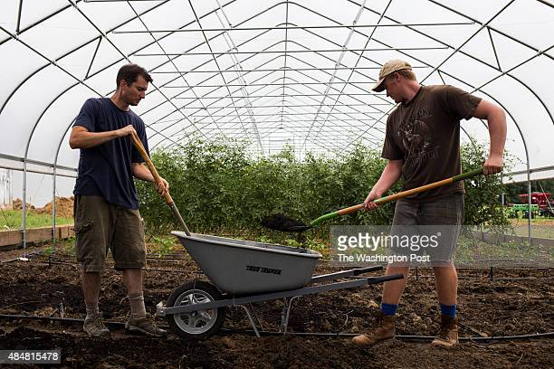 Jonathan Hollingsworth of Takoma Park Md and Michale Perise of Dunkirk Md shovel compost from the Prince George's County Yard Waste Composting...
