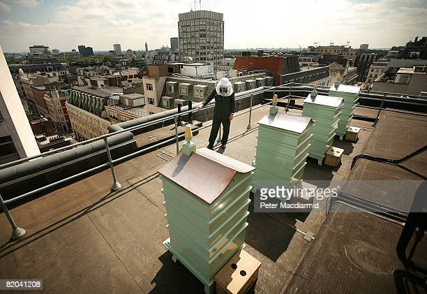 Jonathan Miller sweet grocery buyer and bee hive designer checks the bees on the roof at Fortnum and Mason on July 22 2008 in London Each hive...
