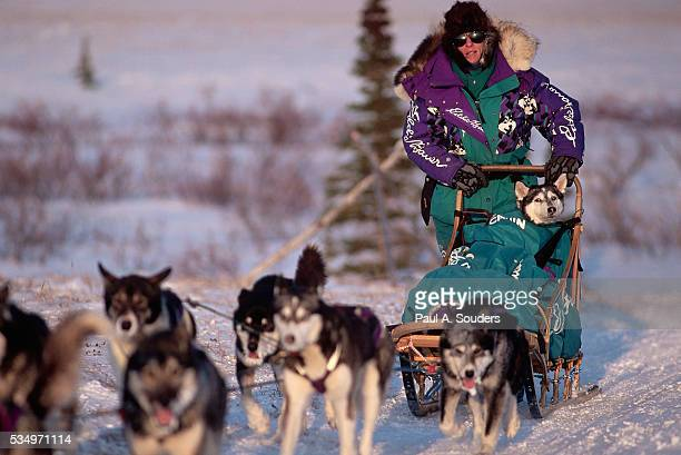 jonrowe sled team on iditarod trail - iditarod stock pictures, royalty-free photos & images