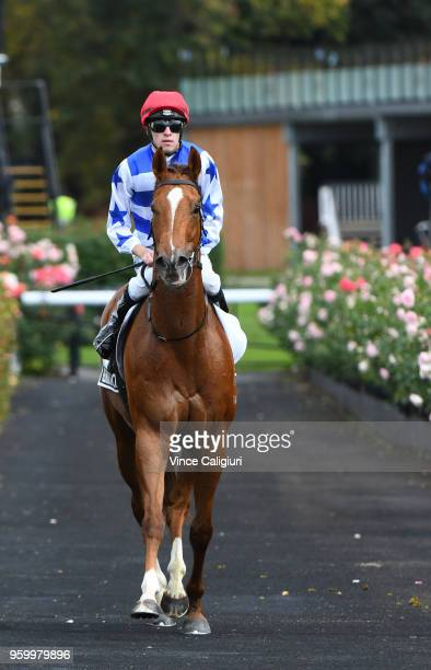 Jordan Childs riding Redkirk Warrior after a track gallop during Melbourne Racing at Flemington Racecourse on May 19 2018 in Melbourne Australia...
