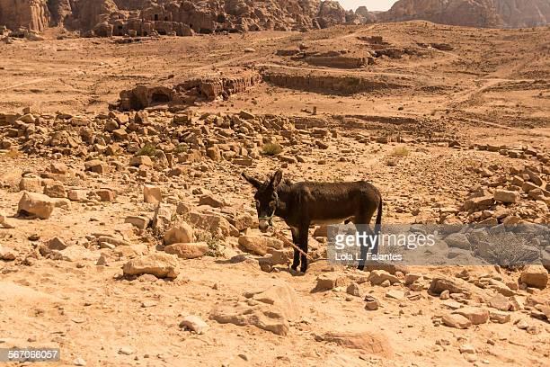 jordan donkey