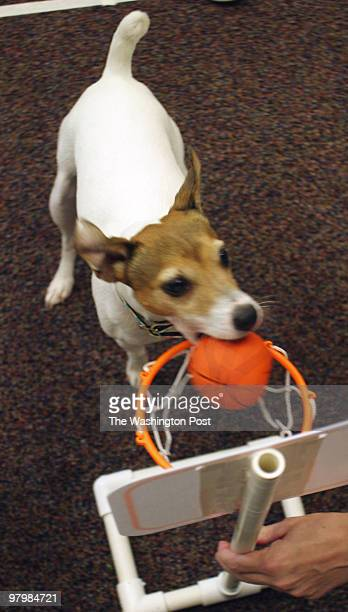 Jordan, the Performing Jack Russell Terrier and his owner Deanne Davenport , a professonal trainer, played to a packed house in the community room of...