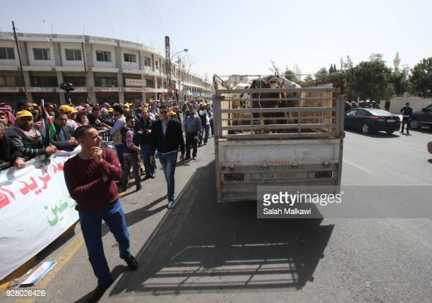 Jordanian farmers bring their cows chickens eggs and milk to the protest at the Jordanian Parliament on March 6 2018 in Amman Jordan Farmers have...