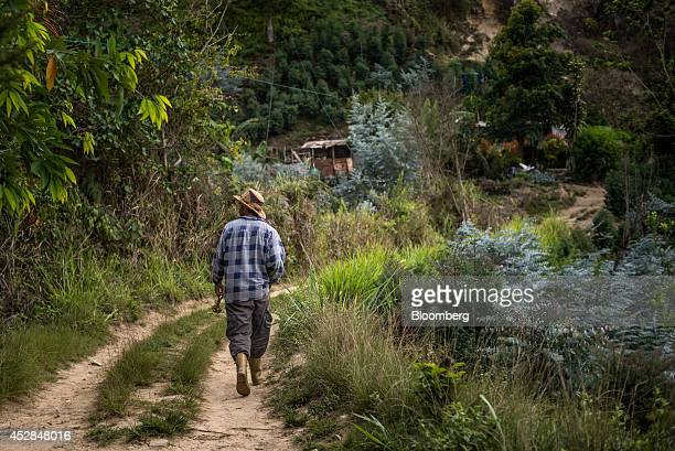 Jorge Graterol walks home to his humble home constructed of sheet metal in the Avila mountain 20 kilometers outside of Caracas Venezuela His family...