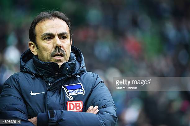 Jos Luhukay head coach of Berlin looks on during the Bundesliga match between SV Werder Bremen and Hertha BSC at Weserstadion on February 1 2015 in...