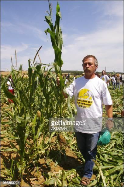 Jose Bove et 1500 militants anti-OGM a Menville ont symboliquement fauche une parcelle de mais transgenique dans un champ de la societe Pioneer. Jose...