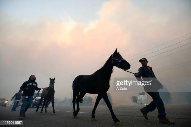 Jose Gutierrez evacuates horses as the Easy fire approaches October 30 2019 in Simi Valley California Fueled by the Santa Ana winds the fire has...