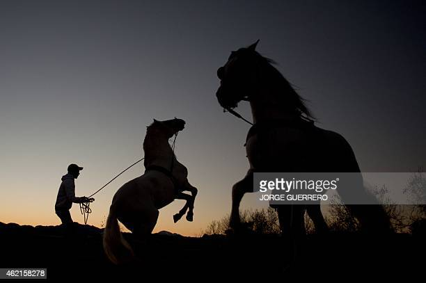 Jose Manuel Lopez trains dressage riding horses at sunset in the southern Spanish town of Ronda on January 25 2015 AFP PHOTO/ JORGE GUERRERO