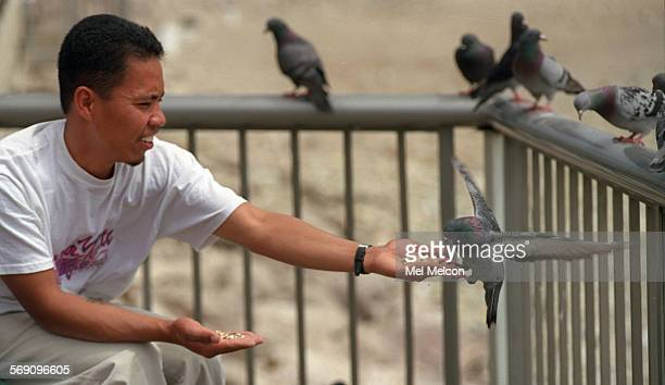 Jose Revano of Oxnard attracts a pigeon towards his outstreched hand filled with a mixture of sunflower and wild bird seed while at San Buenaventura...