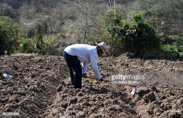 Jose Romero works in a field at the village of San Jose de Soroguara 20 kilometres north of Tegucigalpa on April 16 2018