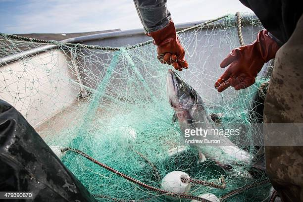 Joseph John Jr and his son Jeremiah John haul in nets while salmon fishing on July 1 2015 in Newtok Alaska Newtok has a population of approximately...