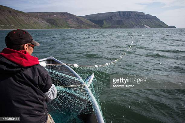 Joseph John Jr hauls in nets while salmon fishing on July 1 2015 in Newtok Alaska Newtok has a population of approximately of 375 ethnically Yupik...