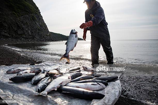 Joseph John Jr washes freshly caught salmon with his son Jeremiah John while waiting for the tide to come in on July 1 2015 in Newtok Alaska Newtok...
