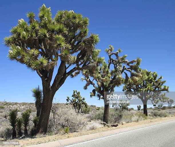 Joshua Tree National Park is located in southeastern California in San Bernardino and Riverside counties. Declared a U. S. National Park in 1994 when...