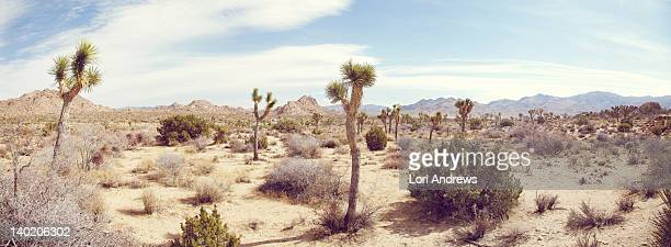 joshua tree national park - palm springs stock-fotos und bilder