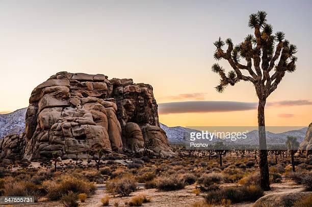 joshua tree national park - san bernardino california stock pictures, royalty-free photos & images
