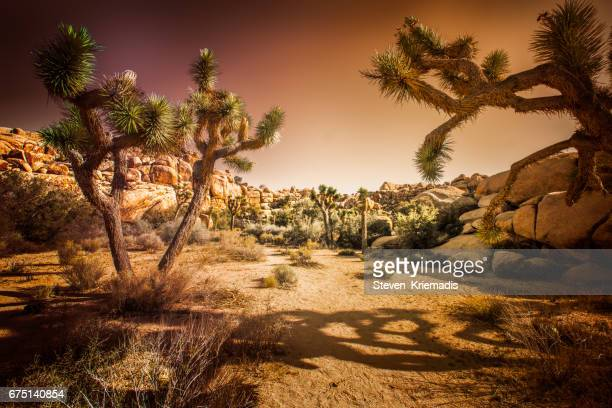 joshua tree national park - joshua tree stock photos and pictures