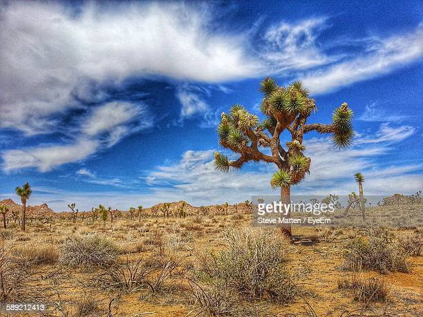 joshua tree on landscape - steve matten stock pictures, royalty-free photos & images