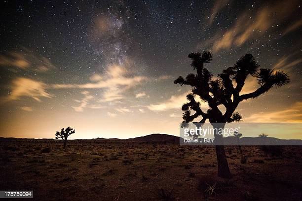joshua trees and a partly cloudy night sky - san bernardino california stock pictures, royalty-free photos & images