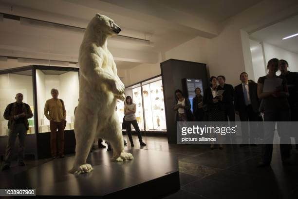Journalists look at a stuffed polar bear during a tour of the natural history area at the museum in Wiesbaden Germany 06 May 2013 After almost four...