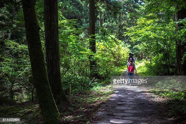 journey into the woods. - koyasan stock-fotos und bilder