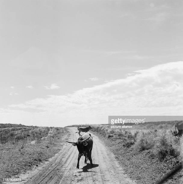 Journey to the colony of Rosenau and the old Jesuit reductions Posadas Argentina 1957   usage worldwide