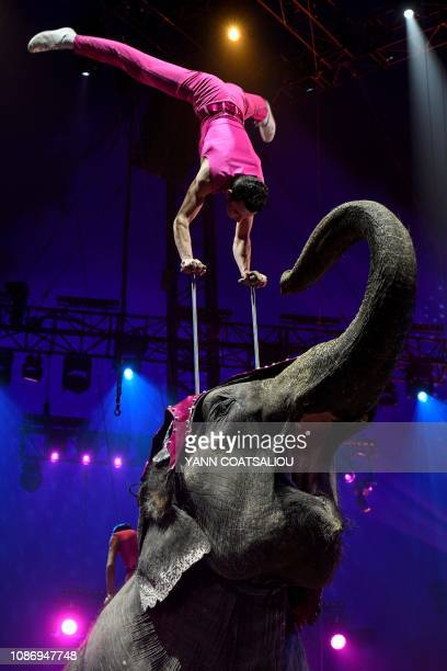 Joy Gartner from a training elephants family performs during the gala of the 43th MonteCarlo International Circus Festival in Monaco on January 22...
