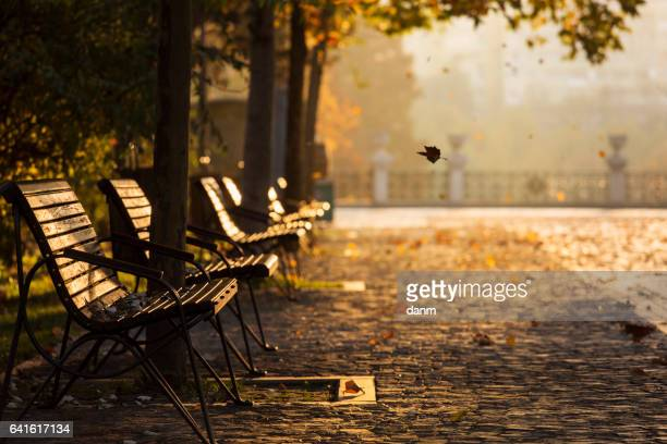 joy of the leaves in autumn with beautiful colourful background