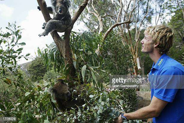 Juan Carlos Ferrero of Spain gets close to a koala kangaroos at Melbourne Zoo in Melbourne, Australia on January 16, 2003. .