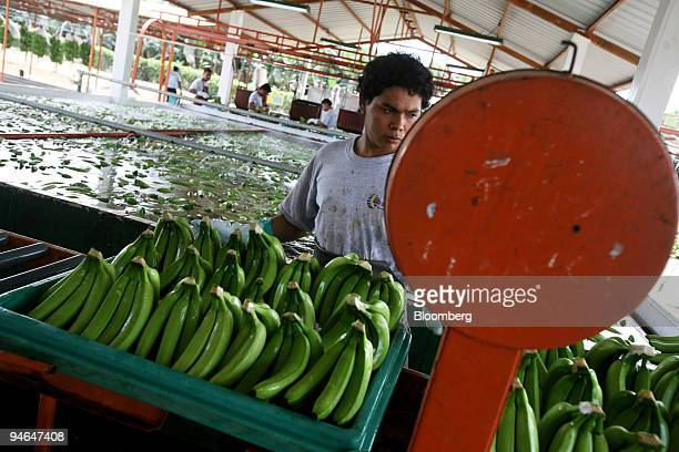 Juan Carlos Vera weighs the best bananas after they are washed in Hacienda Norma Guisella Ecuador on Aug 15 2007 The plantation is owned and operated...