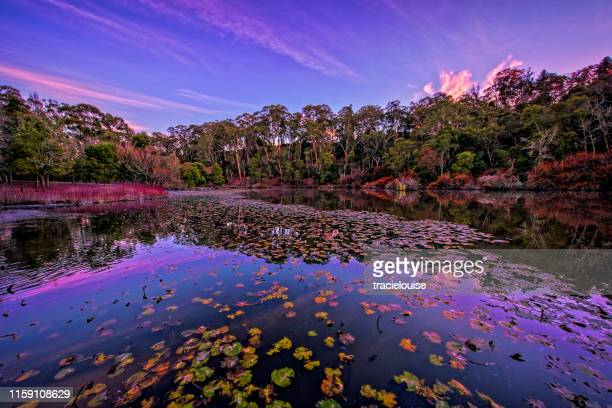 jubilee lake in daylesford at dawn - beauty in nature stock pictures, royalty-free photos & images