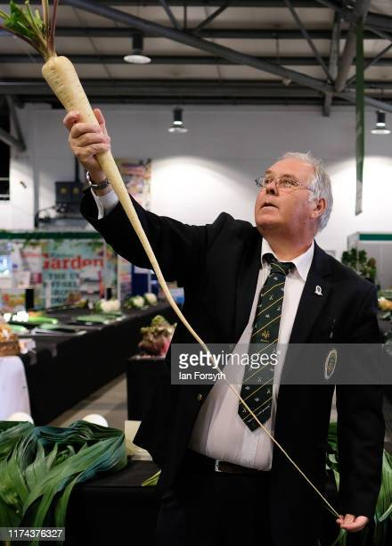 A judge assesses a parsnip during judging for the giant vegetable competition at the Harrogate Autumn Flower Show on September 13 2019 in Harrogate...