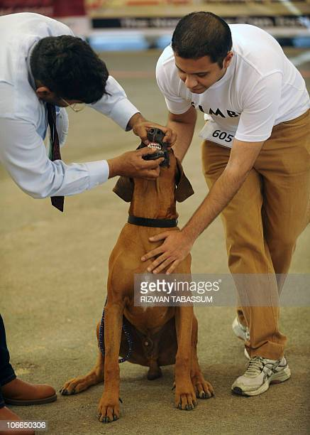 11 The Kennel Club Of Pakistan Pictures, Photos & Images