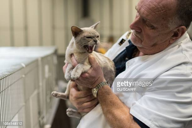A judge holds a Lilac Burmese Pointed Shorthair Pedigree Pet cat at the 42nd 'Supreme Cat Show' organised by the Governing Council of the Cat Fancy...
