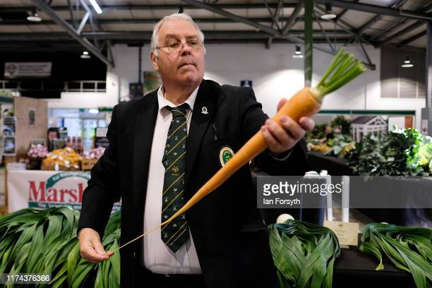 A judge inspects a carrot during judging for the giant vegetable competition at the Harrogate Autumn Flower Show on September 13 2019 in Harrogate...
