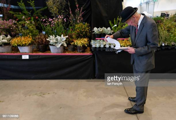 A judge inspects a display during staging day for the Harrogate Spring Flower Show on April 25 2018 in Harrogate England Organised by the North of...