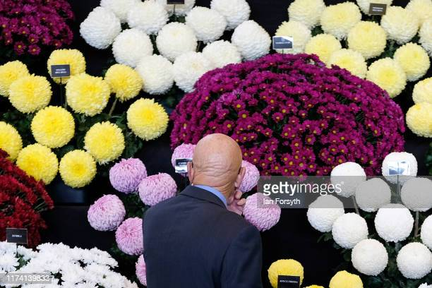 A judge inspects a display of flowers during staging day for the Harrogate Autumn Flower Show on September 12 2019 in Harrogate England The UK's...