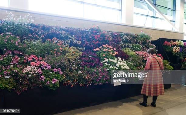 A judge inspects one of the flower displays during staging day for the Harrogate Spring Flower Show on April 25 2018 in Harrogate England Organised...